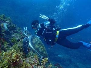 王の浜 アオウミガメとダイバー